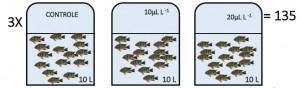 Representação esquemática do experimento com uso de óleo essencial de Lippia alba no transporte de tilapia do Nilo. Fonte: Carlos Eduardo Copatti